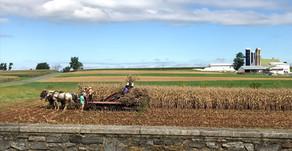 On the Farm (#52Ancestors week 39)