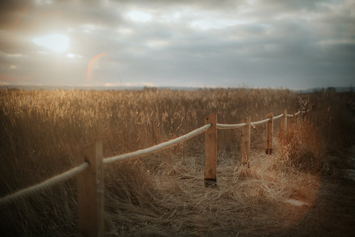 Grass stories 3