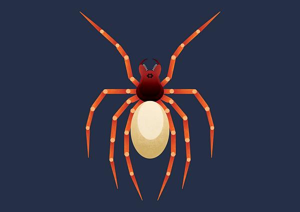 Woodlouse_Spider.png