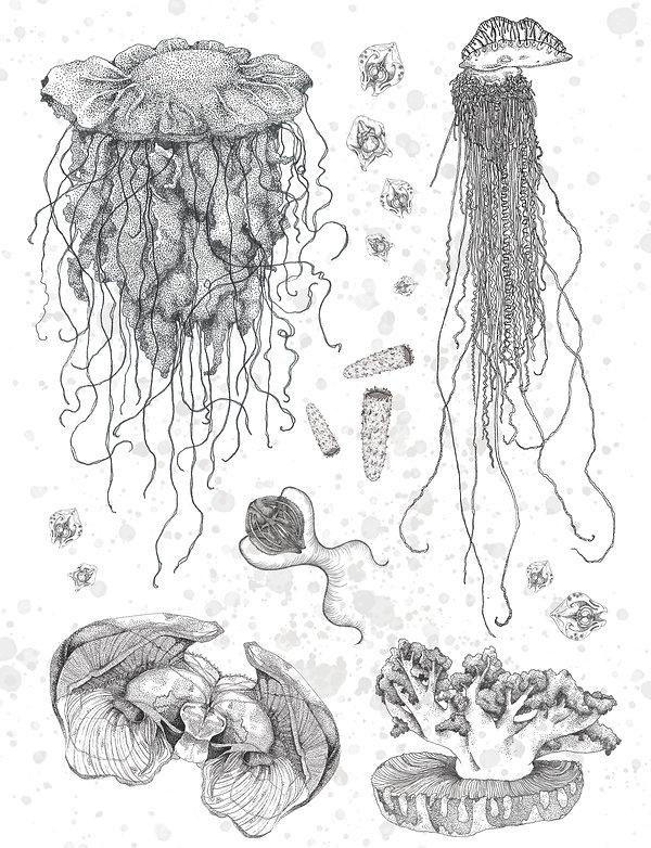 jellyfish potser_edited.jpg