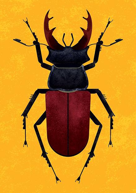 Stag_Beetle_Final.jpg