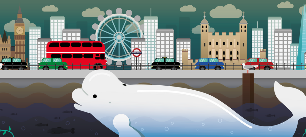 Whale in the Thames