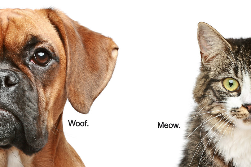 Dogs%20and%20cats_edited.jpg