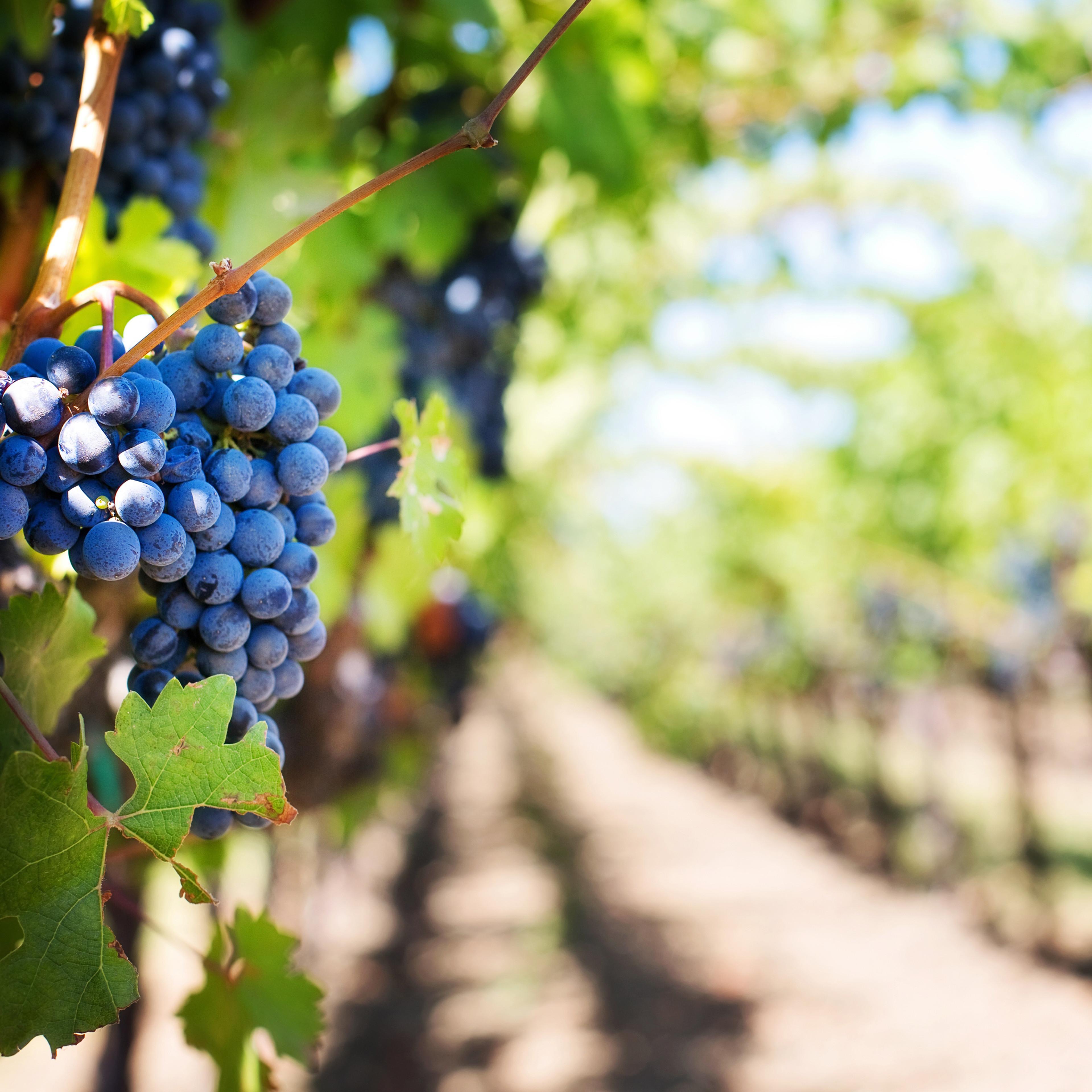Wines of Bordeaux