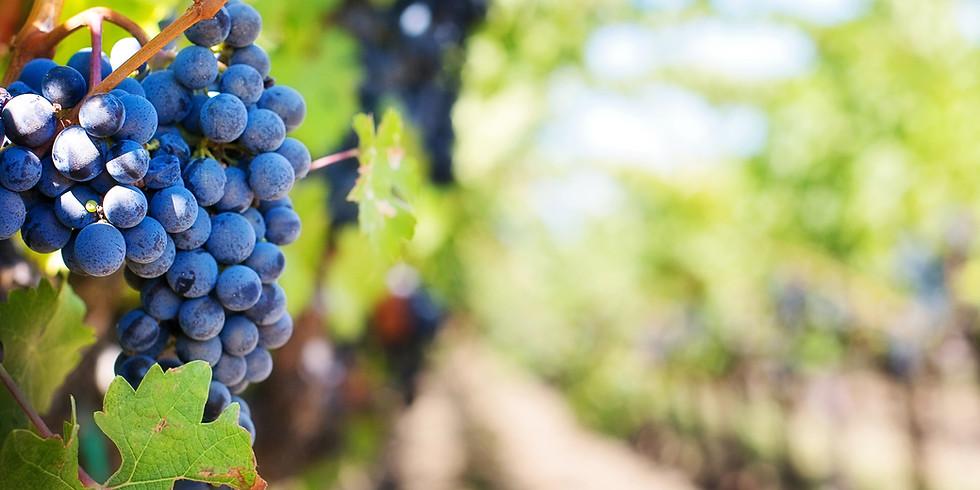 Tehachapi - Goat Yoga & Wine at Dorner Family Vineyards 5pm 10/4/20