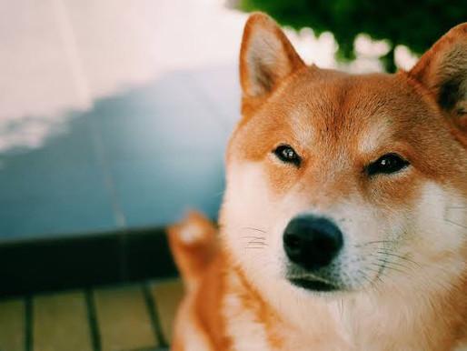 Türkiye'de 1 Milyar TL'lik Dogecoin (DOGE) Vurgunu