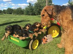moxie puppies.jpg