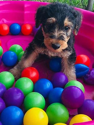 A pretty puppy 🌺.jpg