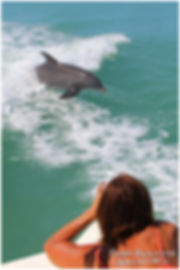 Marco Island Dolphin Tours