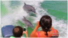Florida Dolphin Shows