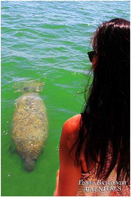 naples marco island manatee tour
