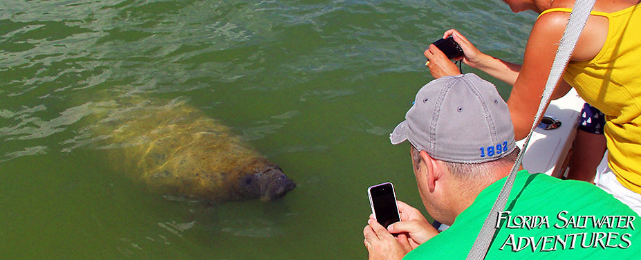 Everglades Manatee Tours
