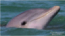 Dolphin Boat Tour Marco Island