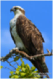 marco island nature photography tour