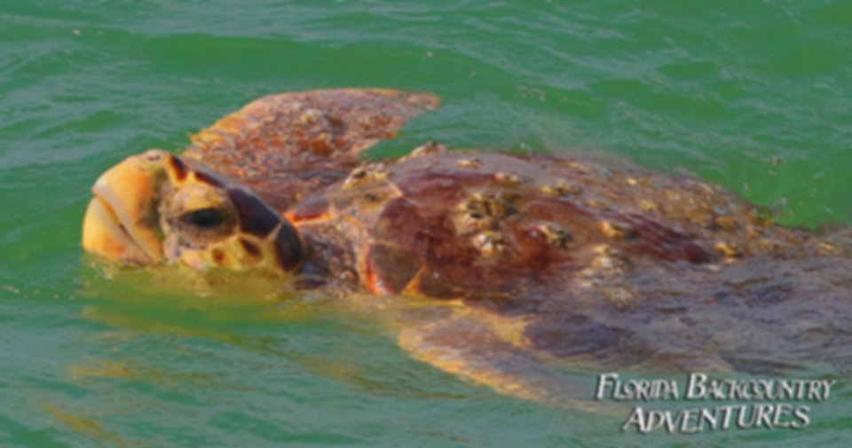 Marine Life Boat Tour with Florida Saltwater Adventures Marco Island