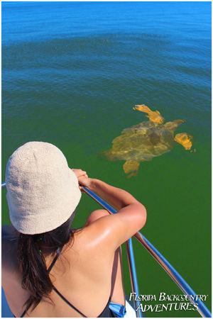 marine life tour naples marco