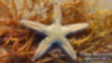 Tide Pools Marco Island