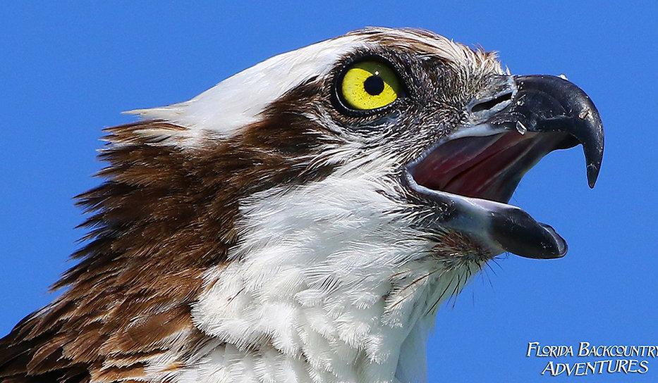 Rookery Bay Birding Tour | Florida Saltwater Adventures