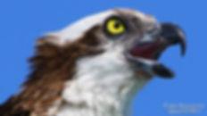 Bird Watching Photography Marco Island