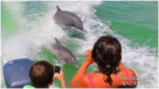Dolphin boat tours naples marco island