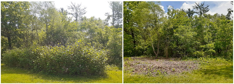 756_Scout Hall Park before and after.jpg