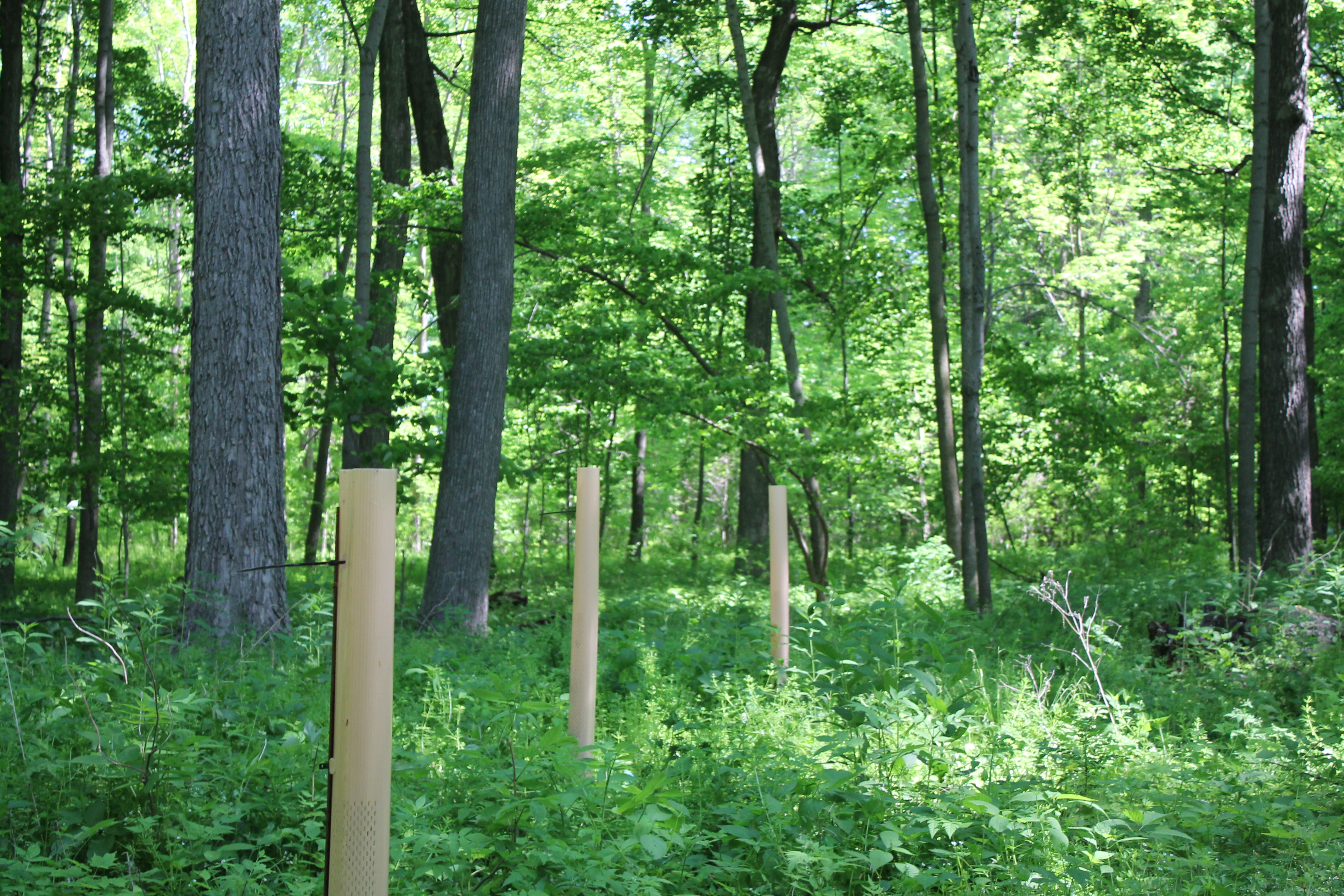 Cooperating for Forest Management