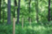 cooperatingforforestmgmt.jpg