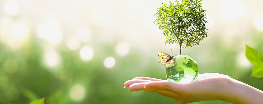 Earth%20crystal%20glass%20globe%20ball%20and%20growing%20tree%20in%20human%20hand%2C%20fly
