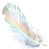 feather_edited_edited_edited_edited.jpg
