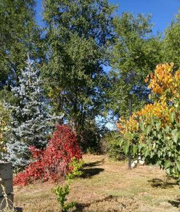 Fall Color Palate near Cheyenne