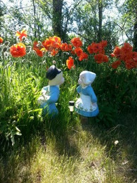 Poppies in Spring!
