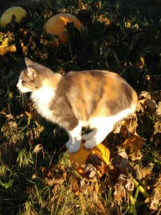 Cinders on a Pumpkin