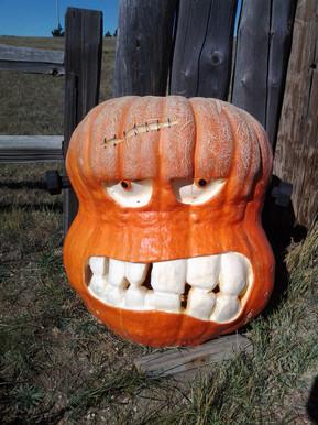 3' Frankenstein Pumpkin Grown Here!