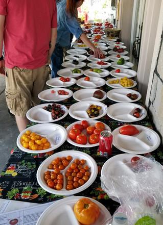 Tomato Tasting Party Setup