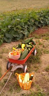 Cheyenne Area Garden Produce Load
