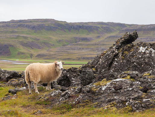 Iceland sees advantages in a four-day work week