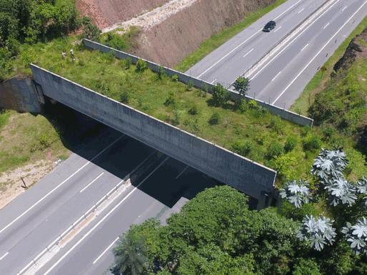 Brazilian road given 'green bridge' for wildlife crossings