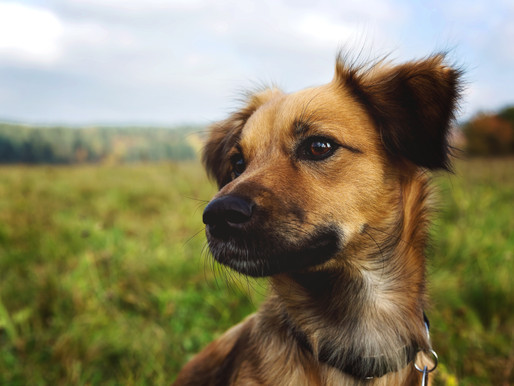 A region of Italy passes a law providing free veterinary care for adopted animals