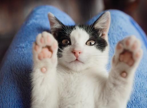 Cat walks into hospital in Turkey seeking help for its kitten