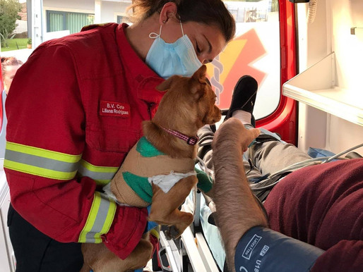 Dog keeps sick owner company in the ambulance