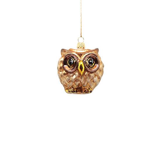 Gufetto marrone / Brown little owl
