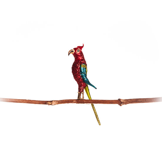 Pappagallo / Parrot