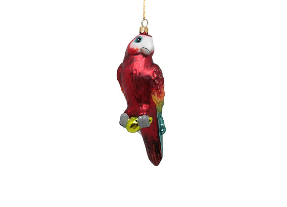 Pappagallo rosso / Red parrot
