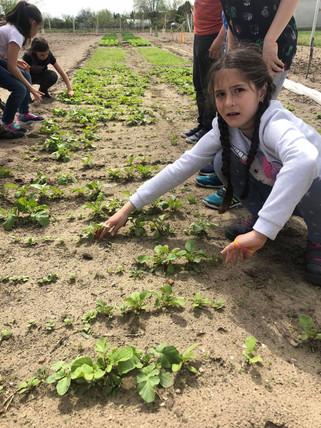 Az iskolakert első termései