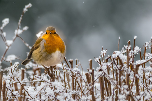 21/12/20 – National Robin Day Raffle Winners!