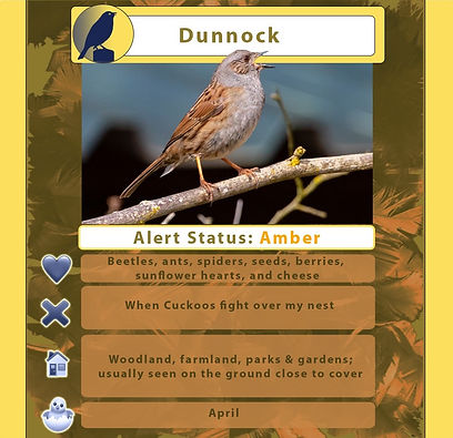 Dunnock treetop trump.jpg
