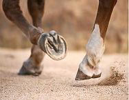 horse hooves.jpg