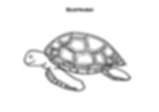 Ausmalbild_Schildkröte.png