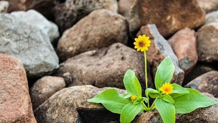 brown-flora-floral-1028930_edited.jpg