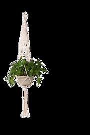 Plante_suspendue_macramé.png